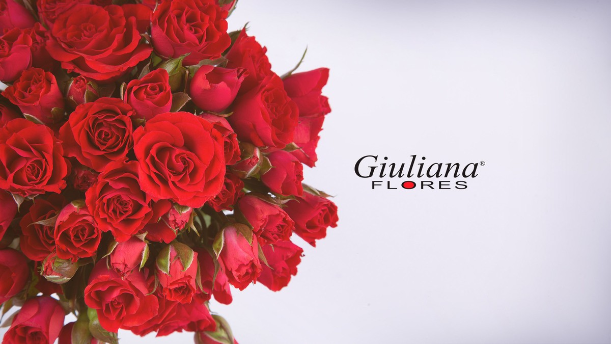 Giuliana Flores   Floricultura em Fortaleza